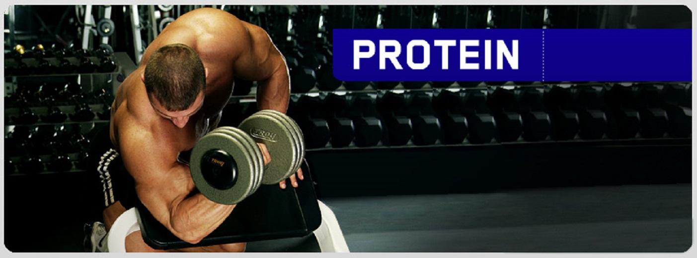 Протеин — строительный материал наших мышц